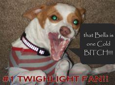 Tango shedding some humor on twilight