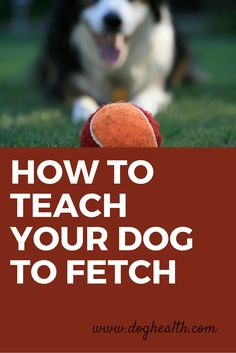 Do you have a dog that doesn't know how to play fetch? Doesn't like to hold toys in his mouth? Will fetch the ball but won't give it to you? Learn how to teach a dog to fetch here.