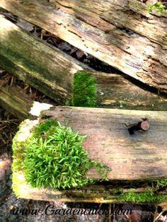 Moss on the split rail fence www.Gardenchick.com