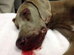 10 month old puppy beaten with baseball bat brings tears world-wide