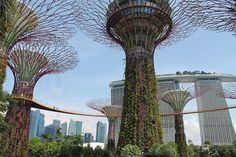 The supertrees and Marina Bay Sands at Gardens by the Bay, part of my 2 days in Singapore itinerary