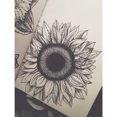 sunflower drawing tu