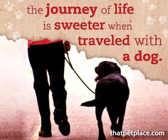 The journey of life is sweeter when traveled with a dog. | thatpetplace.com