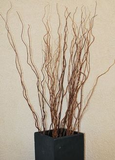 Natural Curly Willow makes a fabulous addition to any floral arrangement, centerpiece, or craft project. Order our long stem, curly willow branches today! Spray Paint Wicker, Painted Wicker, Vase With Branches, Willow Branches, Curly Willow Wedding, Curly Willow Centerpieces, Dry Plants, Nature Artwork, Tall Vases