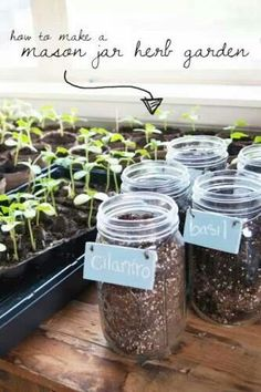 Indoor gardening. Great idea for all the mason jars I have. #bhgfirst #bhgfl1st #bhgre. www.bhgfirst.com