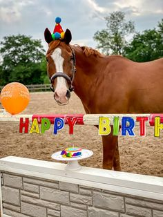"""We asked to see how our readers celebrate their horses' birthdays and we weren't disappointed. From hats to cake to balloons to beverages, Horse Nation readers love to give their horses birthday """"treats. Birthday Wishes And Images, Happy Birthday Pictures, Happy Birthday Messages, Happy Birthday Greetings, Birthday Photos, Happy Birthday With Horses, Horse Birthday, Snoopy Song, Birthday Message For Friend"""