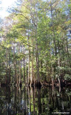 Kayaking Shingle Creek Kissimmee Florida by Calculated Traveller