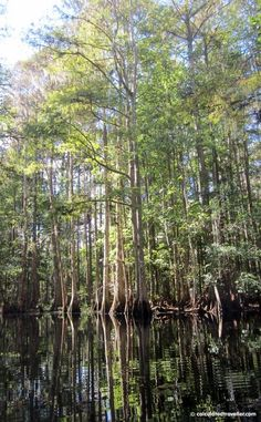 Kayaking Shingle Creek Kissimmee Florida by Calculated Traveller