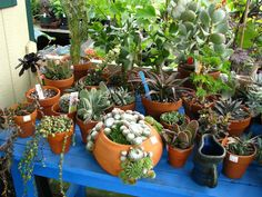 Cacti and Succulents as Houseplants - See more at: http://worldofsucculents.com/cacti-and-succulents-as-houseplants/
