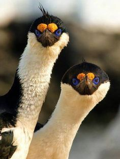 Whatever these are, they are eye catching and adorable in their own way.  Love those wonderful eyes.