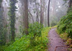 Love the Mount Sutro Trail. San Francisco, California.