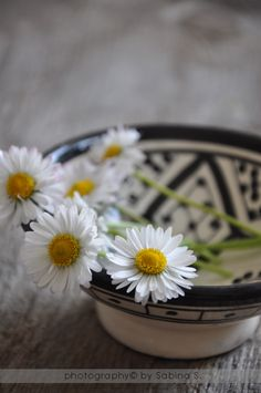 Margherite bellissime  MARGHERITE, FARFALLE E SOGNI
