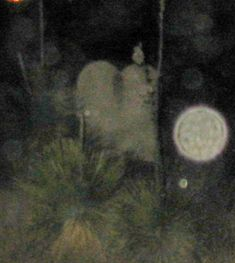 our ghost girl, just love her.  taken in a new mexico grave yard.