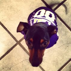 Ready for the game! LSU!