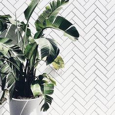 These palm fronds have us thinking of sunny, summer weather and a beach vacation. Let the countdown begin... #rg via @besocialpr