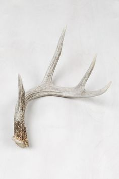 Natural Deer Antler | United By Blue