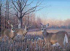 Curiosity Under the Oaks – Whitetail Deer Original Painting by Jim Kasper Hunting Signs, Hunting Art, Deer Hunting, Hunting Stuff, Hirsch Wallpaper, Deer Wallpaper, Wildlife Paintings, Wildlife Art, Deer Paintings