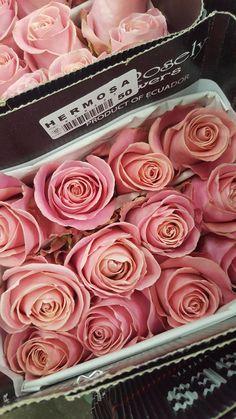 Hermosa rose Blush Flowers, Cut Flowers, Colorful Flowers, Wedding Flowers, Flower Colors, Rose Varieties, Bridal Bouquet Fall, Flower Market, Color Blending
