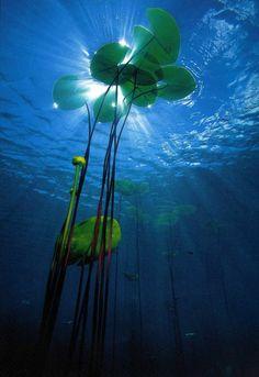 piscine biologique, les profondeurs d'un lac