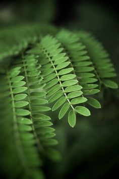 Pale Green - OGQ Backgrounds HD
