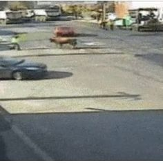 Best Gif's of the Day – November 24, 2014   Out of my way! http://imgur.com/L6wxK58.gifv Well...okay then. http://i.imgur.com/Hc9NIAk.gif Swooping p(...)