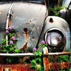 VW graveyard. Connecticut.