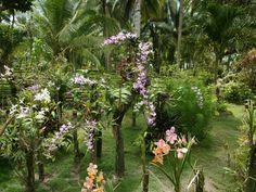 orchid_garden_siargao_island-dsc00135-wp.jpg (1600×1200)