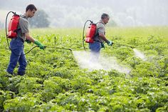 Crop sprays that turn off pest genes without altering the plant's genome could be the first in a new generation of pesticides that circumvent GM regulations