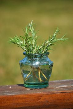 Glass Vase, Fruit, Vegetables, Flowers, Plants, Gardening, Lawn And Garden, Vegetable Recipes, Plant