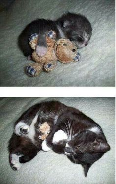 Teddy bears are your best friends. Trust me.