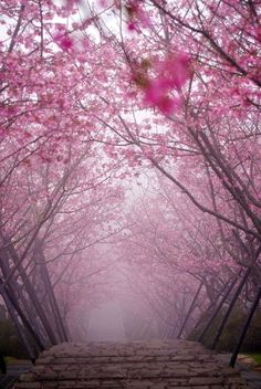 If only I can walk through this... Cherry Blossom Bridge, Kyoto, Japan