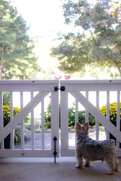 Porch gate for dogs and children