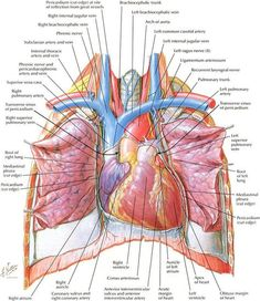 Netters Anatomy Is Seriously Beautiful You Dont Have To Be A Science Geek
