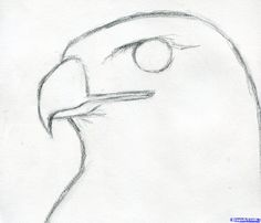 How to Draw a Hawk, Red-Tailed Hawk, Step by Step, Birds, Animals ...