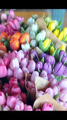 #tulipanes #tulpen #blumen #home #deco