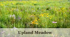 seed mixes - conservation seeds