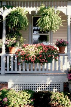Curb appeal container garden on Victorian style house front porch with impatiens in windowbox on rail, hanging plants Boston ferns, pots, sun and shade in summer Dream Garden, Home And Garden, Porch Garden, Garden Trellis, Hanging Ferns, Fall Hanging Baskets, House Front Porch, Front Porches, Wonderful Flowers