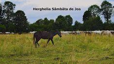 Caii lipitani de la Herghelia Sâmbăta de Jos, județul Brașov Romania, My Life, Horses, Animals, Animales, Animaux, Animal, Animais, Horse
