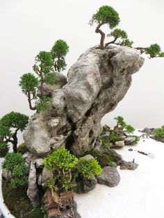 Another example of the waterfall rocks behind the koi pond A close-up of a part of a penjing style planting from the World Bonsai Friendship Federation Convention that took place in China last month Bonsai Forest, Bonsai Art, Garden Terrarium, Bonsai Garden, Moss Garden, Paludarium, Topiary, Ikebana, Horticulture