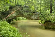 All sizes | Rock Bridge, Swift Camp Creek, Daniel Boone National Forest, Wolfe Co, KY | Flickr - Photo Sharing!