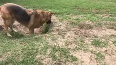 A Baby Hippo Learning How To Swim cute animals adorable animal baby animals wildlife wild life funny animals hippo Cute Animal Videos, Funny Animal Pictures, Cute Funny Animals, Cute Baby Animals, Funny Dogs, Animals And Pets, Pet Dogs, Dogs And Puppies, Doggies