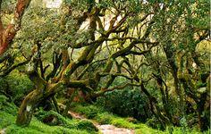 Bonsai, a árvore da felicidade - Máxima