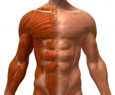 How Ectomorphs Can Build Muscle & How Many Days A Week They Should Train