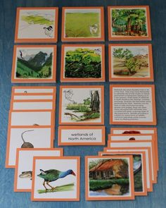 Biomes of North America 3 part cards - Not free but beautiful!!!