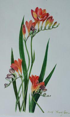 #수채화#후리지아 Watercolor And Ink, Watercolor Flowers, Watercolor Paintings, Plant Painting, Fabric Painting, Botanical Flowers, Botanical Art, Colored Pencil Techniques, Vintage Botanical Prints