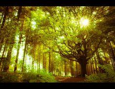 Brocéliande, la forêt du roi Arthur, de Merlin et de la fée Morgane.....