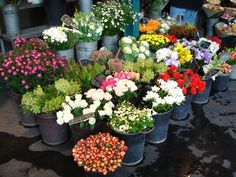 Parisian flower market