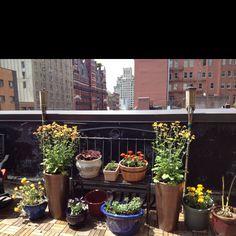 Rooftop garden beginnings.
