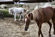 What a beautiful day for riding! Cappadocia is known to be the land of beautiful horses. Ariana Concierge team is ready for you to get the most out of your Cappadocia experience. We offer a variety of adventurous concierge services for an unforgettable journey. For more details, please contact us @ info@arianalodge.com | Kapadokya güzel atlar ülkesi olarak da bilinir. Gizemli toprakların eşsiz vadilerinde romantik bir tura ne dersiniz?