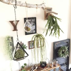 自然のアート♪ 流木で心惹かれるインテリアをDIY! Diy Wall Decor, Home Decor, Go Green, Beautiful Interiors, Cactus Plants, Plant Hanger, Decor Styles, Ladder Decor, Orchids